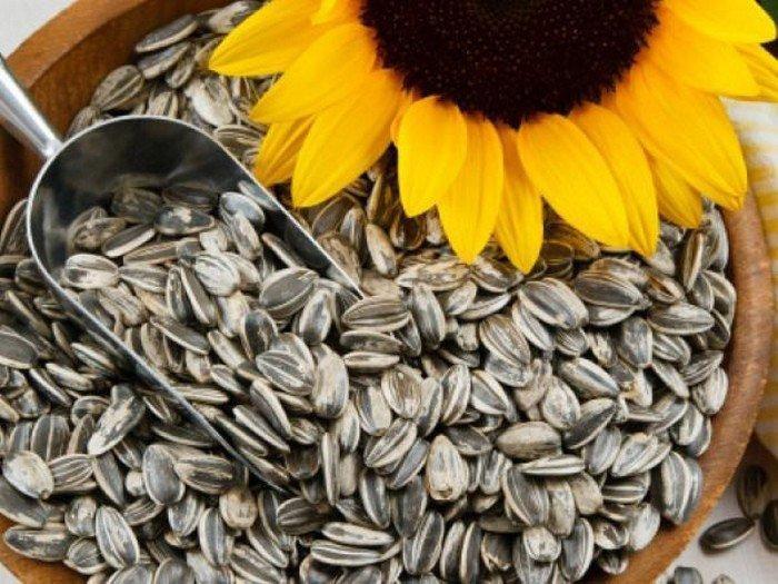 Hạt hướng dương chứa nhiều vitamin E giúp cơ thể cải thiện chức năng phổi