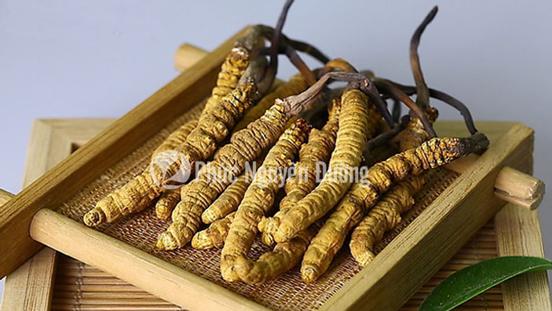 Món ăn bổ dưỡng yến sào chưng đông trùng hạ thảo