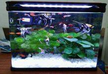 Mua bể cá hải sản cho nhà hàng mini ở Hà Nội